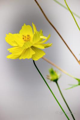Description :flowers for wallpaper,flowers for wallpaper desktop,flowers wallpapers for mobile,flowers wallpapers for facebook,flowers wallpapers for ...