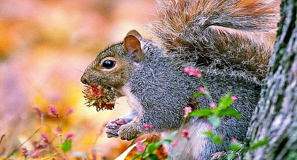 Funny squirrel animals wallpaper wallpapers gallery - Funny squirrel backgrounds ...