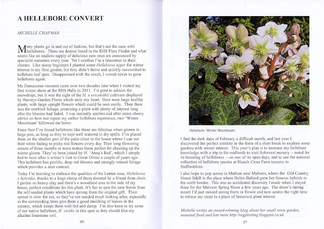 Hellebore article in Suffolk Plant Heritage's magazine which details how I became a hellebore convert