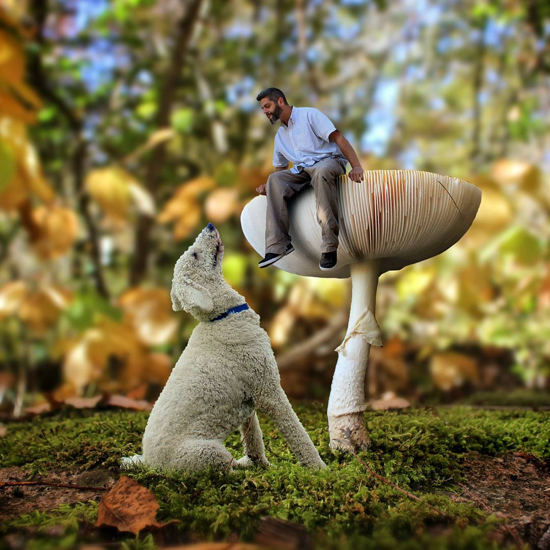 03-Alice-was-Right-Christopher-Cline-Juji-The-Giant-Dog-Photo-Manipulations-www-designstack-co
