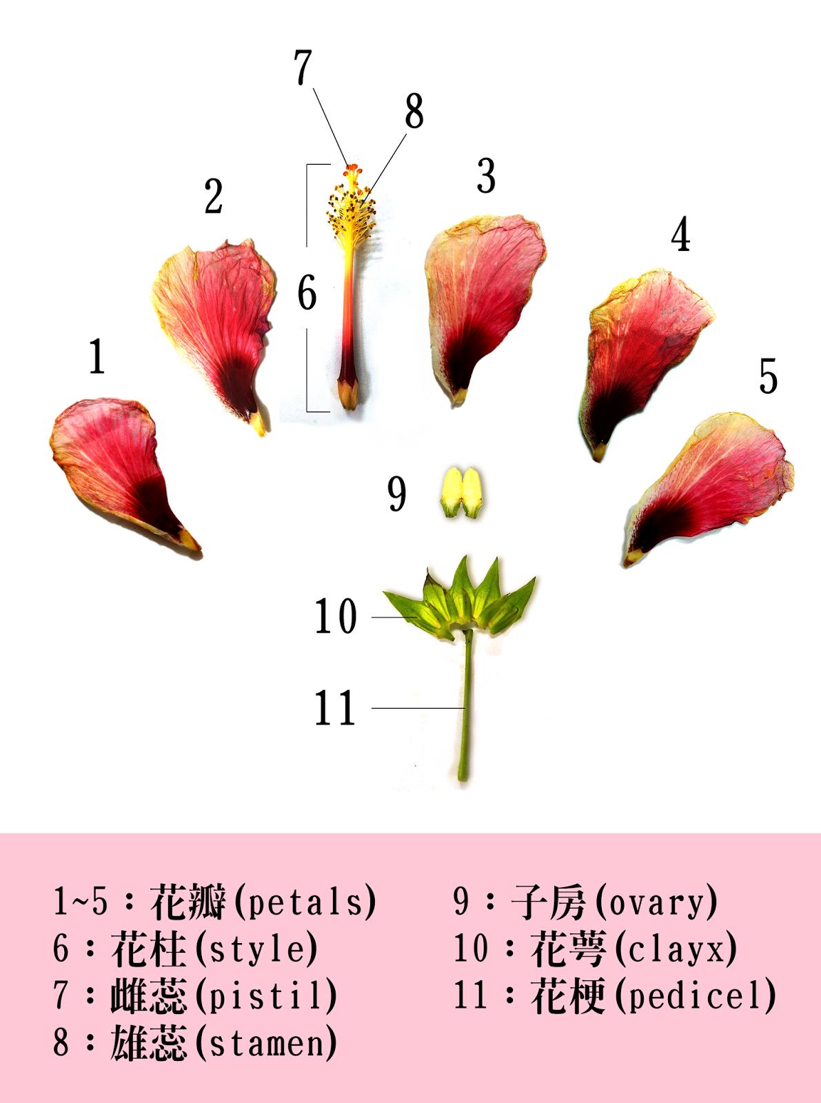 About Biology: 花的解剖