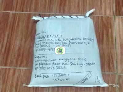 Benih pesanan SINGGIH BAYUAJI Purworejo, Jateng..   (Setelah Packing)