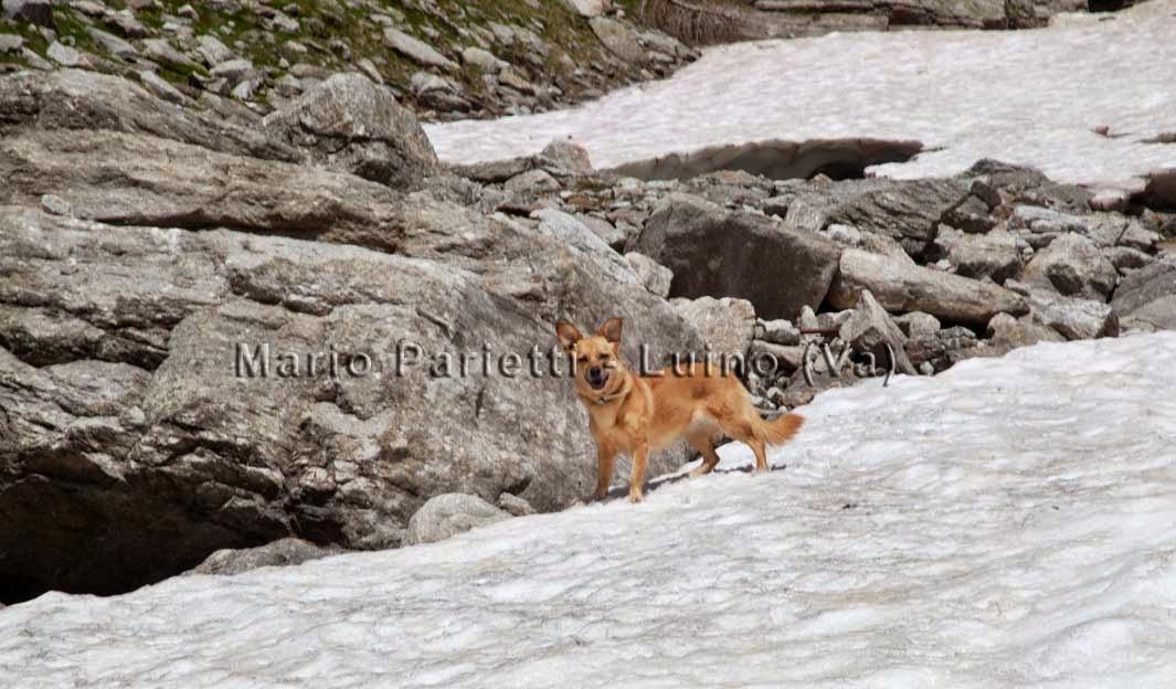 Nevaio sul sentiero per il lago di Cingino