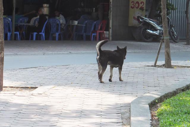 sidewalk-with-dog