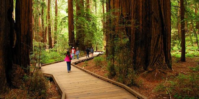 Sobre o Parque Nacional de Muirwoods na Califórnia