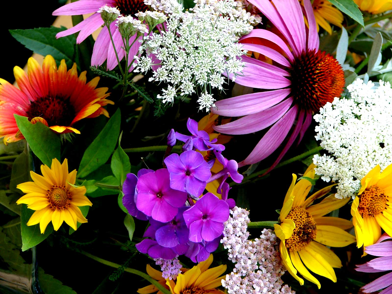 SUN SHINES: colorful flowers background