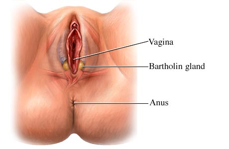 Absess in a gland of the vagina read
