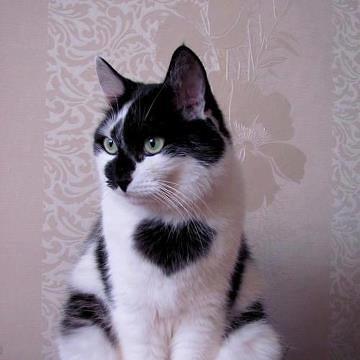 Bambini bianchi gatti gatti maschera maschera duro plastica gattino GATTO Animale Maschera Kitty