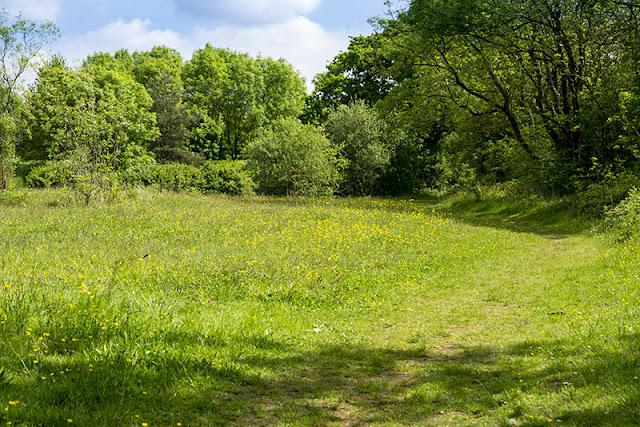 Howe Park Wood Wild Flowers