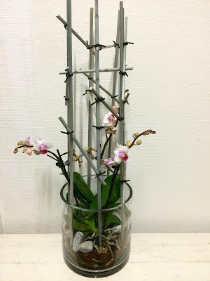 orkide diy