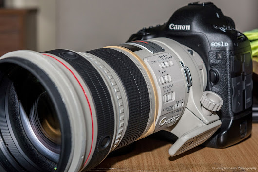Canon EF 300mm f/2.8L IS USM Lens Sample Pictures