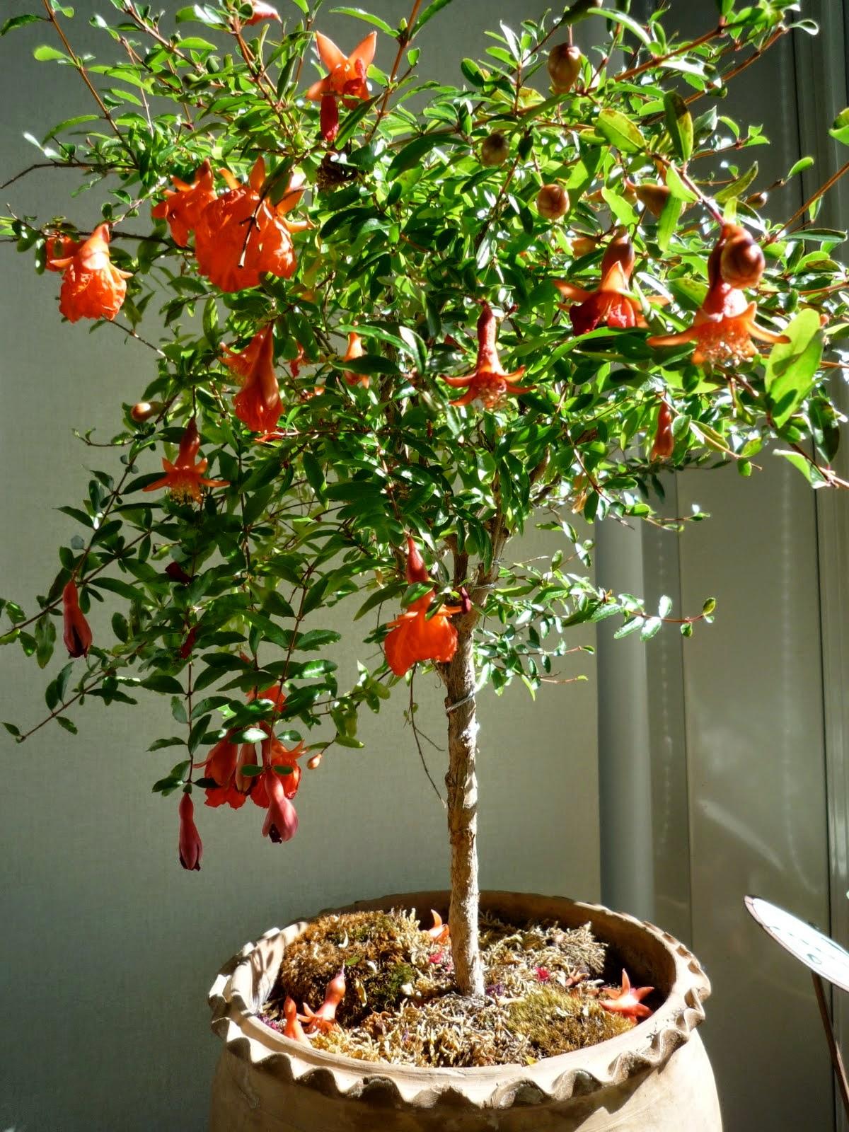 Menu For Olive Garden: Powell River Garden Club : Sub-tropical Plants