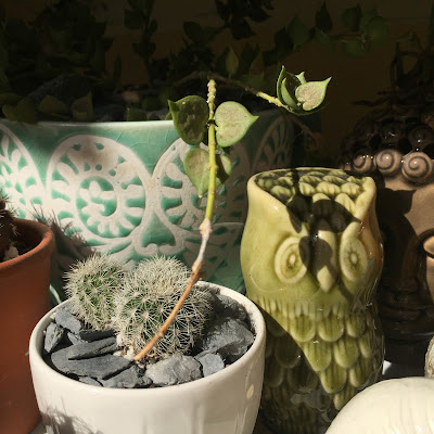 cactus, succulent, cactus planter, succulent planter, garden, garden design