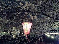 Nakameguro hanami night