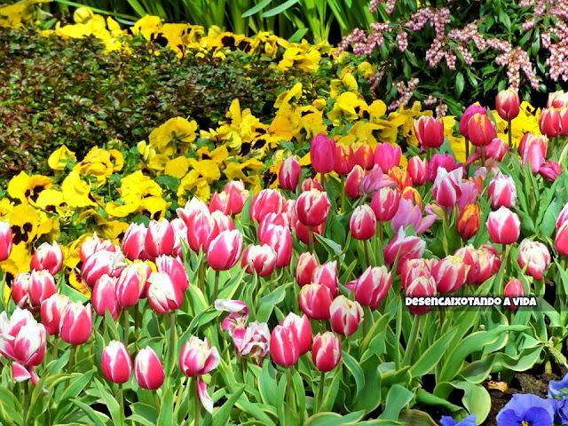 keukenhof parque holandês, tulipas e outras flores