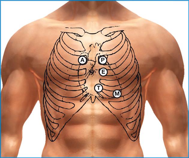 Dove si trova il cuore a destra o a sinistra telodicoio for Arredo ingross 3 dove si trova