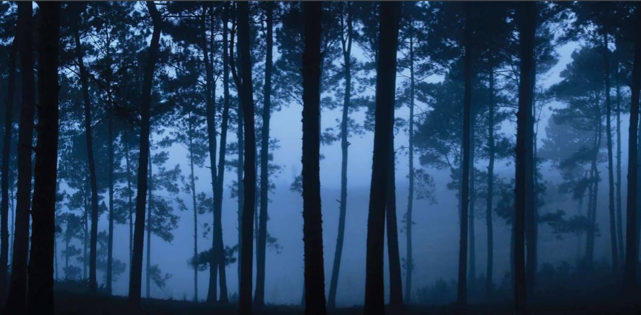 Eladio Fernandez. Blue Pines (Pinos Azules, Pue blo Viejo).