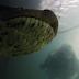 buzos se topan con anaconda de 7 metros en brasil