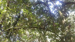 Floresta - Infração Administrativa contra o Patrimônio Genético e o Conhecimento Tradicional Associado