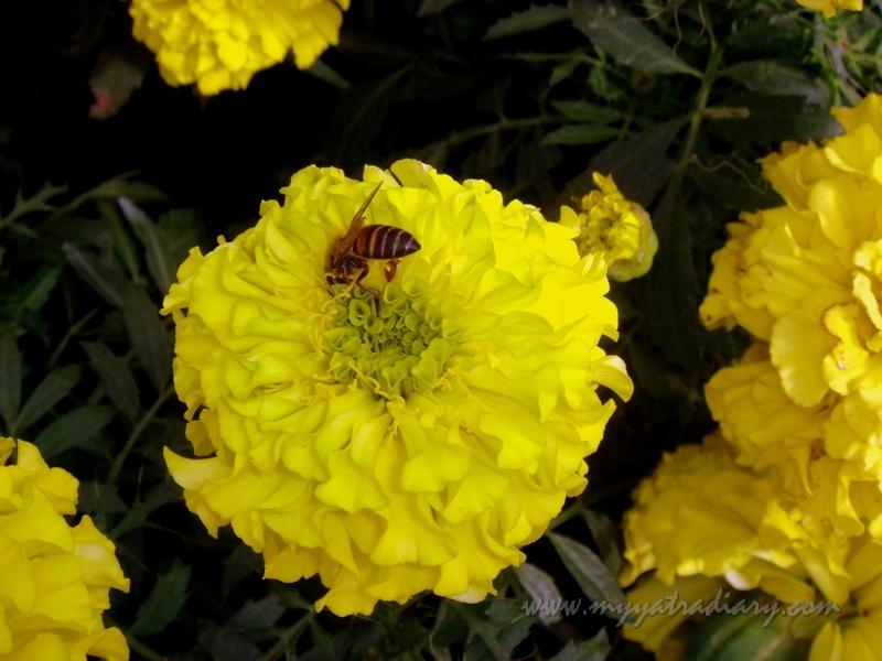 Flower show at Lalbaug Botanical Garden Glass House, Bangalore