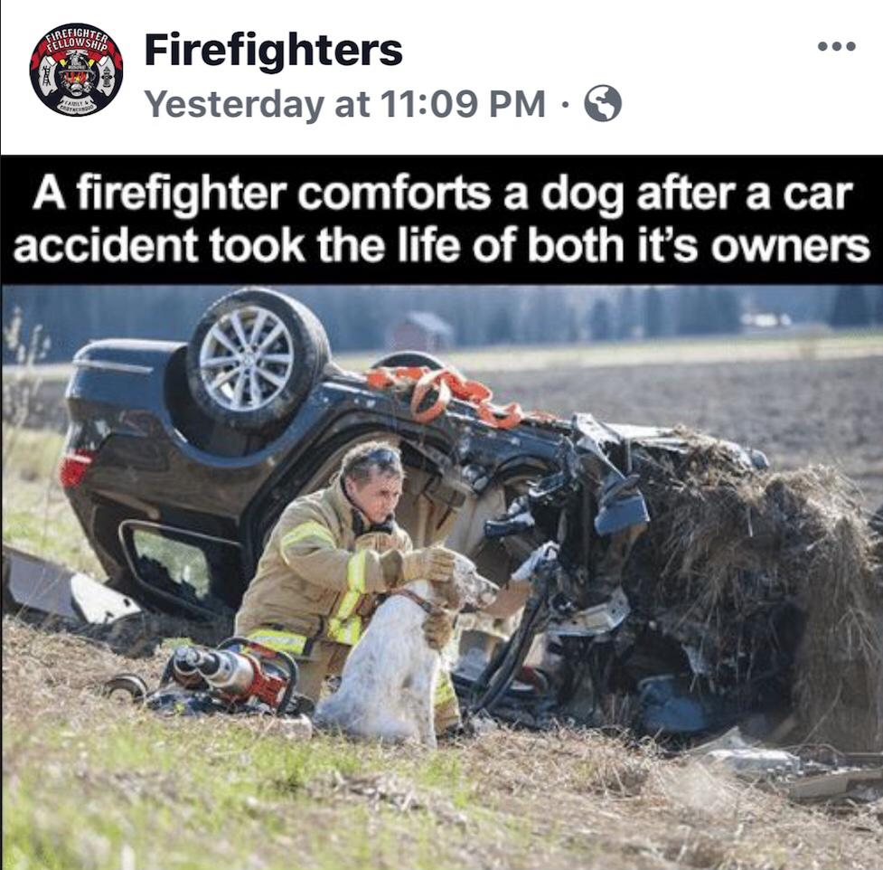 Firefighter Comforts Dog After A Car Accident Meme Viral