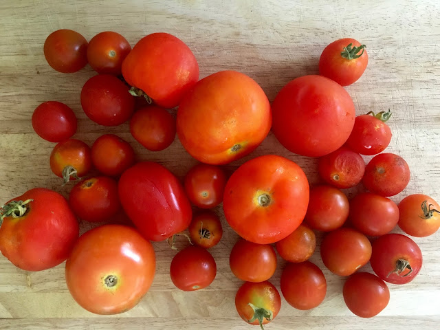 What to do with a glut of homegrown tomatoes