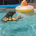 Όταν ο σκύλος και η γάτα διασκεδάζουν μαζί στην πισίνα...