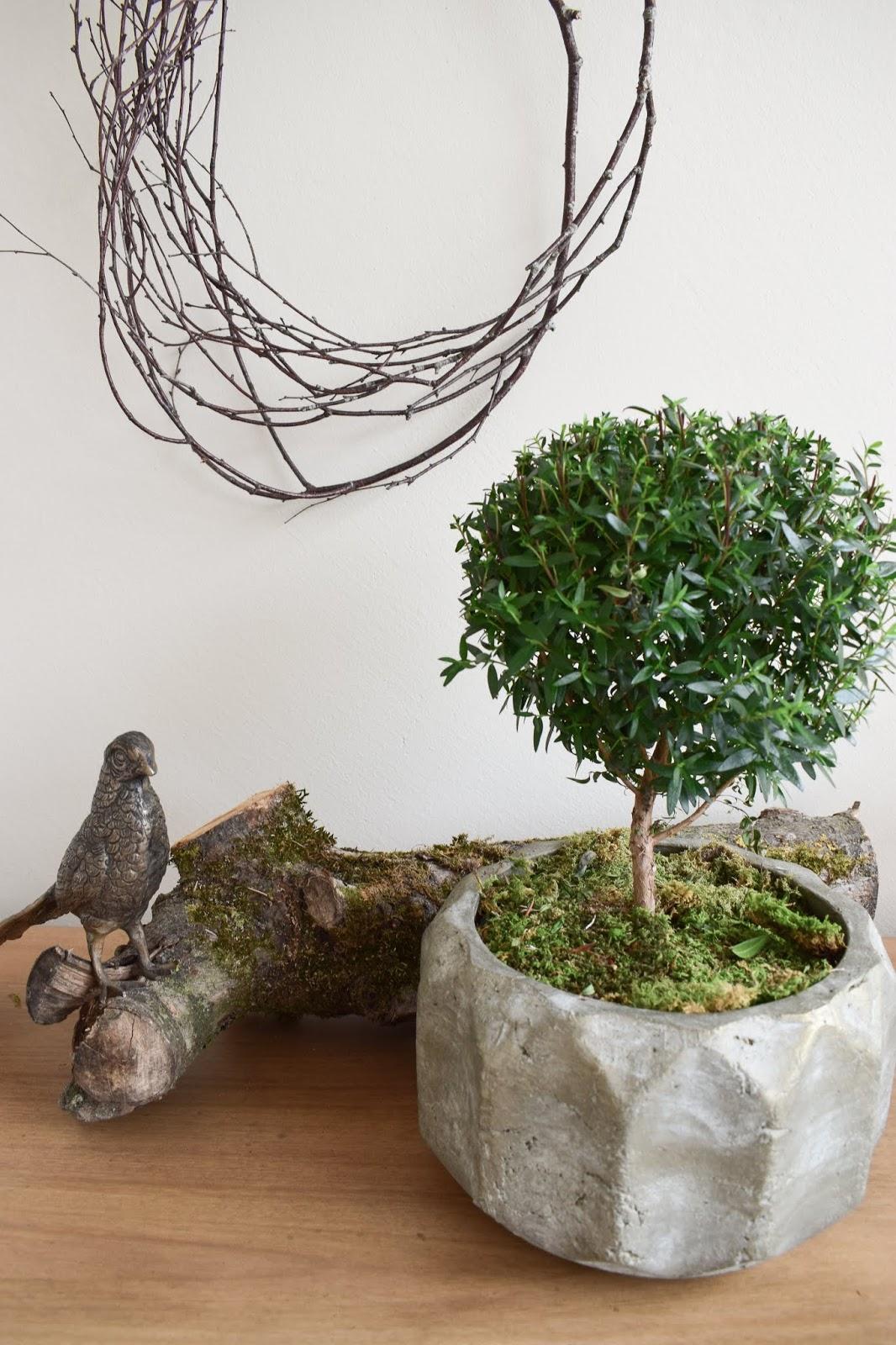 Einfach selbermachen: Naturdeko mit Topfpflanze: Verschönerung Übertopf Zimmerpflanze mit Moos Eukalyptus Schleierkraut. Myrte Dekoidee Deko Dekoration Übertopf natürlich dekorieren