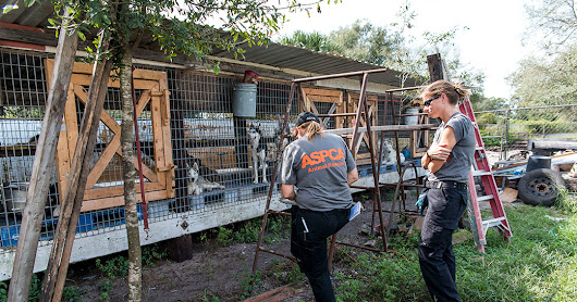 ASPCA urges USDA to restore public access to animal inspection reports