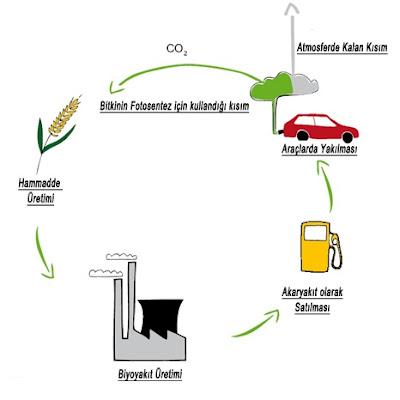 Biyoetanol CO2 döngüsü