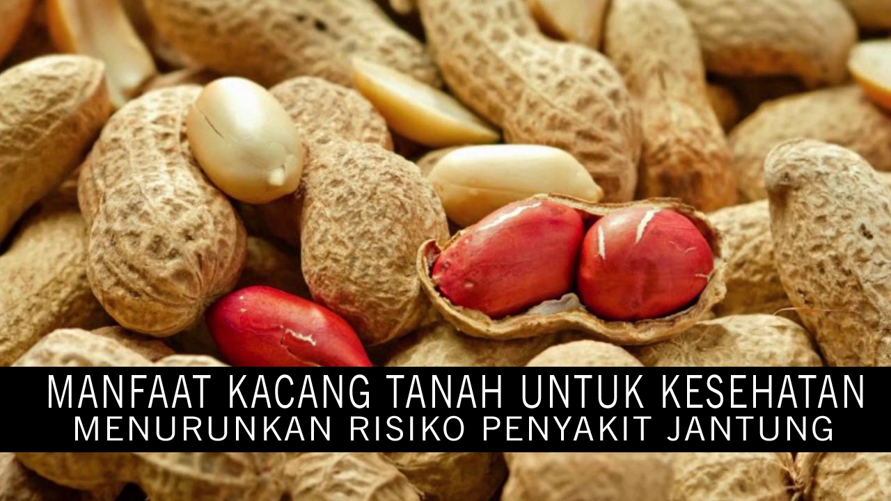 Manfaat Kacang Tanah Bagi Kesehatan Jantung