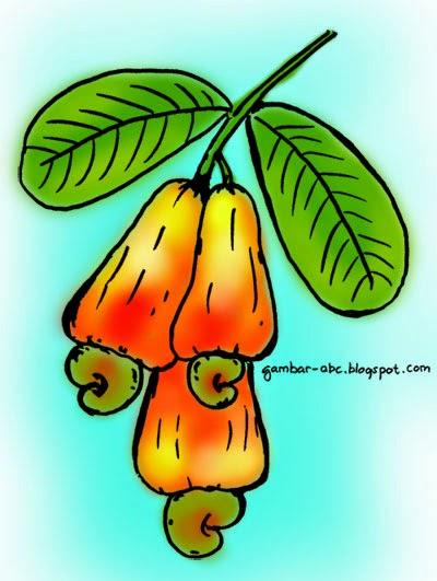 Mewarnai Gambar Jambu Monyet O Warna