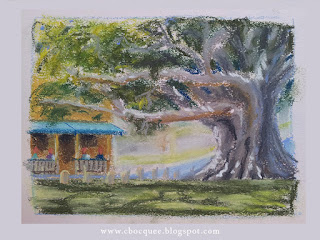 en plein air pastel drawing by Australian illustrator Christian Bocquee of a beautiful old fig tree