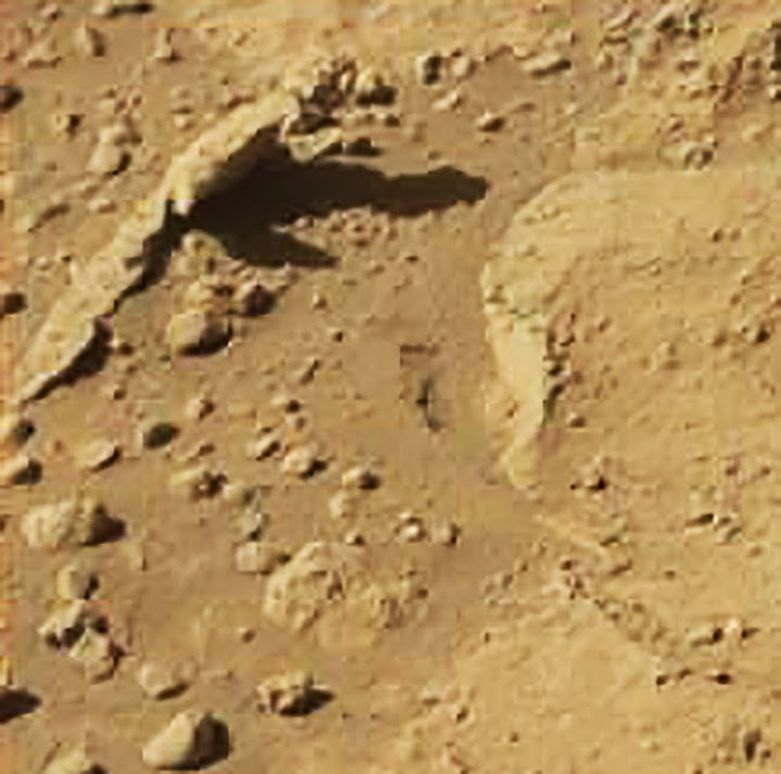 nasa mars lizard - photo #24