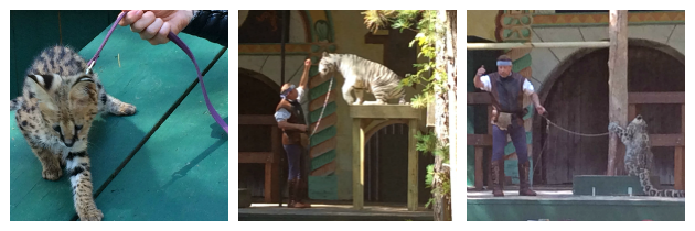 Great Cats World Park Demonstration at King Richard's Faire Carver MA_New England Fall Events