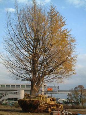 樹木をすっぽりとそのまま移植する華麗な重機【o】