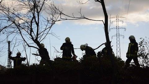 Az erős szélben kidőlt fák, leszakadt ágak miatt hívták a fővárosi tűzoltókat