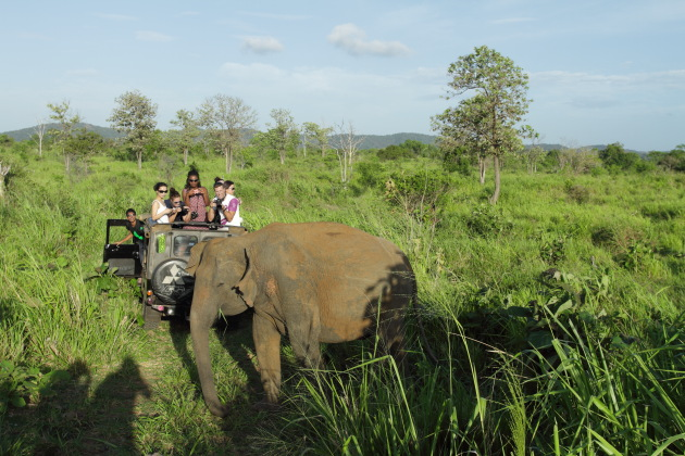 The thrill of getting real close to the wild elephant at Minneriya National Park, Srilanka