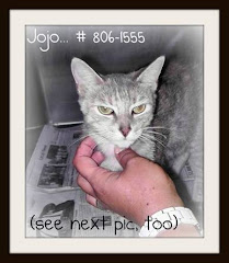 9/10/11 Affectionate Dilute Tortie Cat at High Kill Shelter Wants Out of Her Cage. Please Save Her