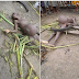 "CHECK OUT: What They Did To A Suspected ""Pregnant Witch"" Caught In Delta State {Photos}"