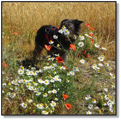 Blumen am Feldrand