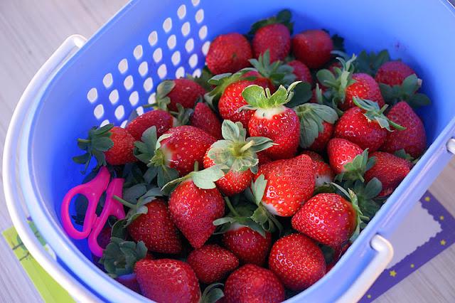 DSC00888 - 台中觀光果園│採草莓不用去大湖,台中草莓世界就在潭子慈濟醫院對面開採囉
