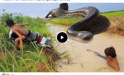 WATCH HOW THIS TWO INDIAN GUYS ESCAPE  FROM A BIG SNAKE