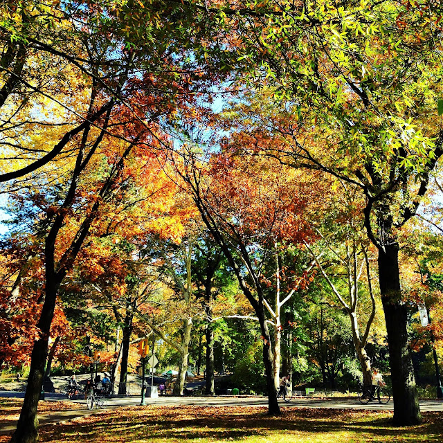 New-York central park arbres