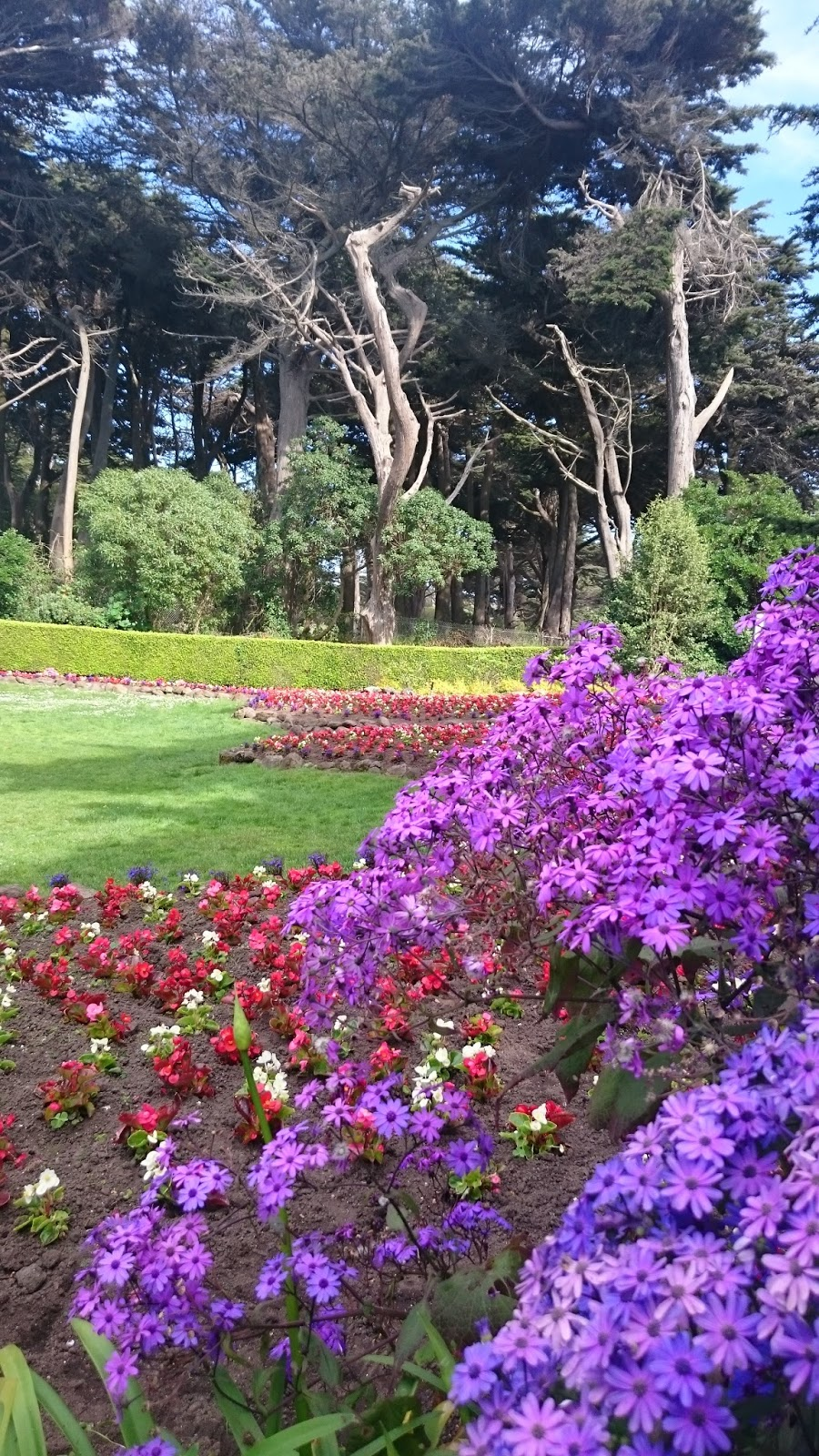Flowers in Golden Gate Park San Francisco