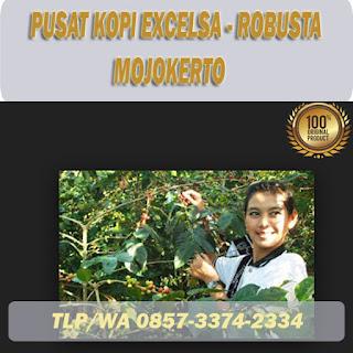 beli Kopi excelsa di mojokerto gratis ongkir ! 085733742334