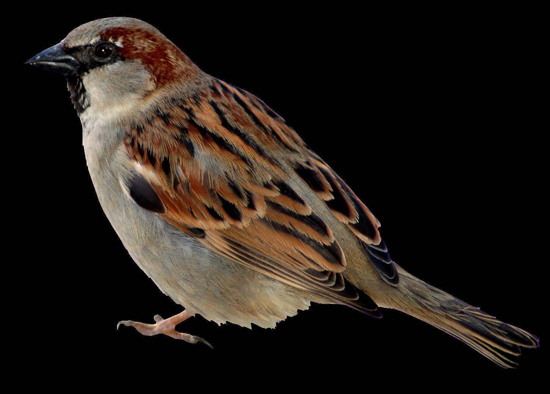 Поздравлением малыша, картинка птицы для детей на прозрачном фоне