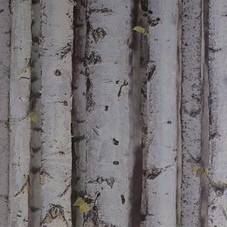 kavak ağacı duvar kağıdı