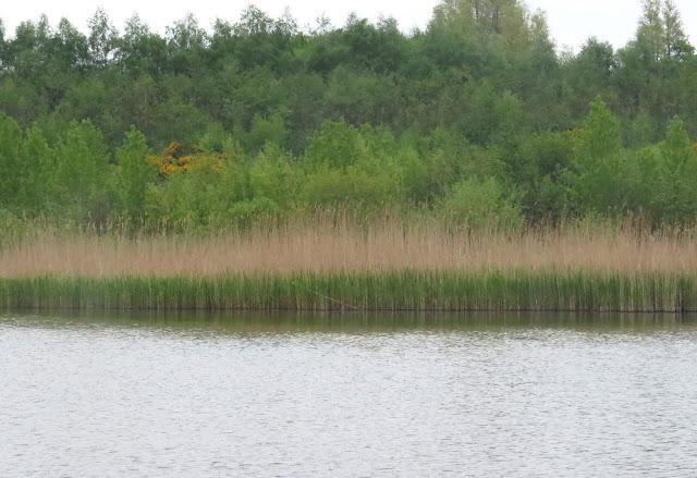 Albert Village Lake, Leicestershire