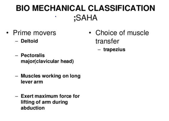 Image result for saha shoulder muscles